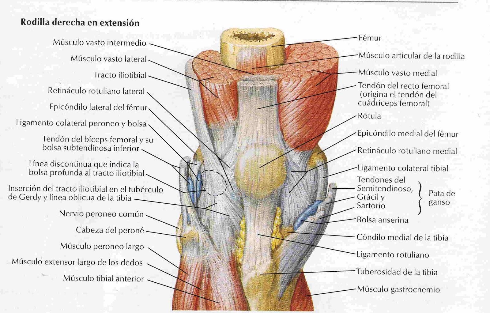 Elementos de Anatomía y Fisiología Humana: diciembre 2012