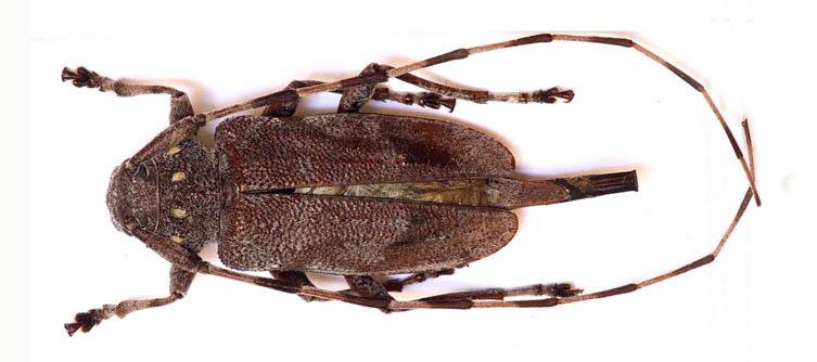 Boletín Sociedad Andaluza de Entomología Vol. 12