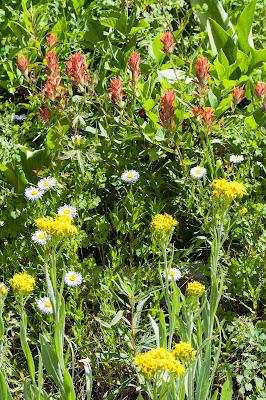 Wildflowers, Emerald Lake