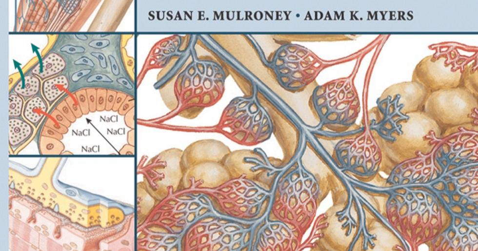 Lujo Anatomía Línea Adam Motivo - Anatomía de Las Imágenesdel Cuerpo ...