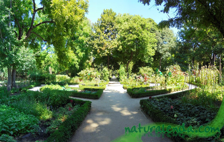 huerto del jardin botanico de madrid