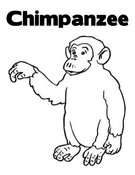Chimpanzee Coloring Pages To Kids