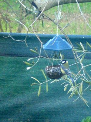 inverno selvatico per la luby-aiutiamo gli uccelli selvatici in inverno