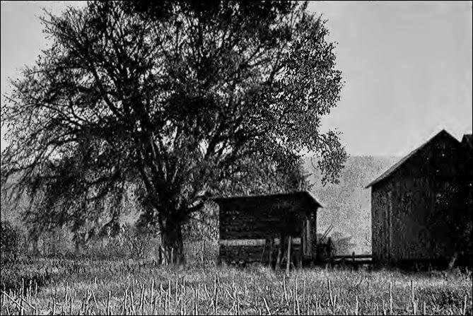 Tiadaghton Elm where Pine Creek Declaration signed