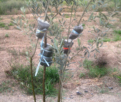 Abdul Wahab Arbain: Cangkuk Cabang Pokok Zaitun
