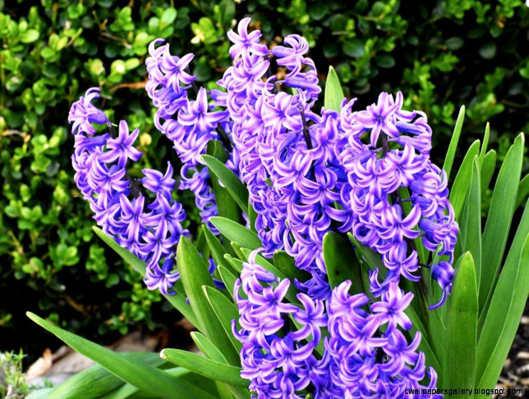 Beautiful Purple Flowers 7037987