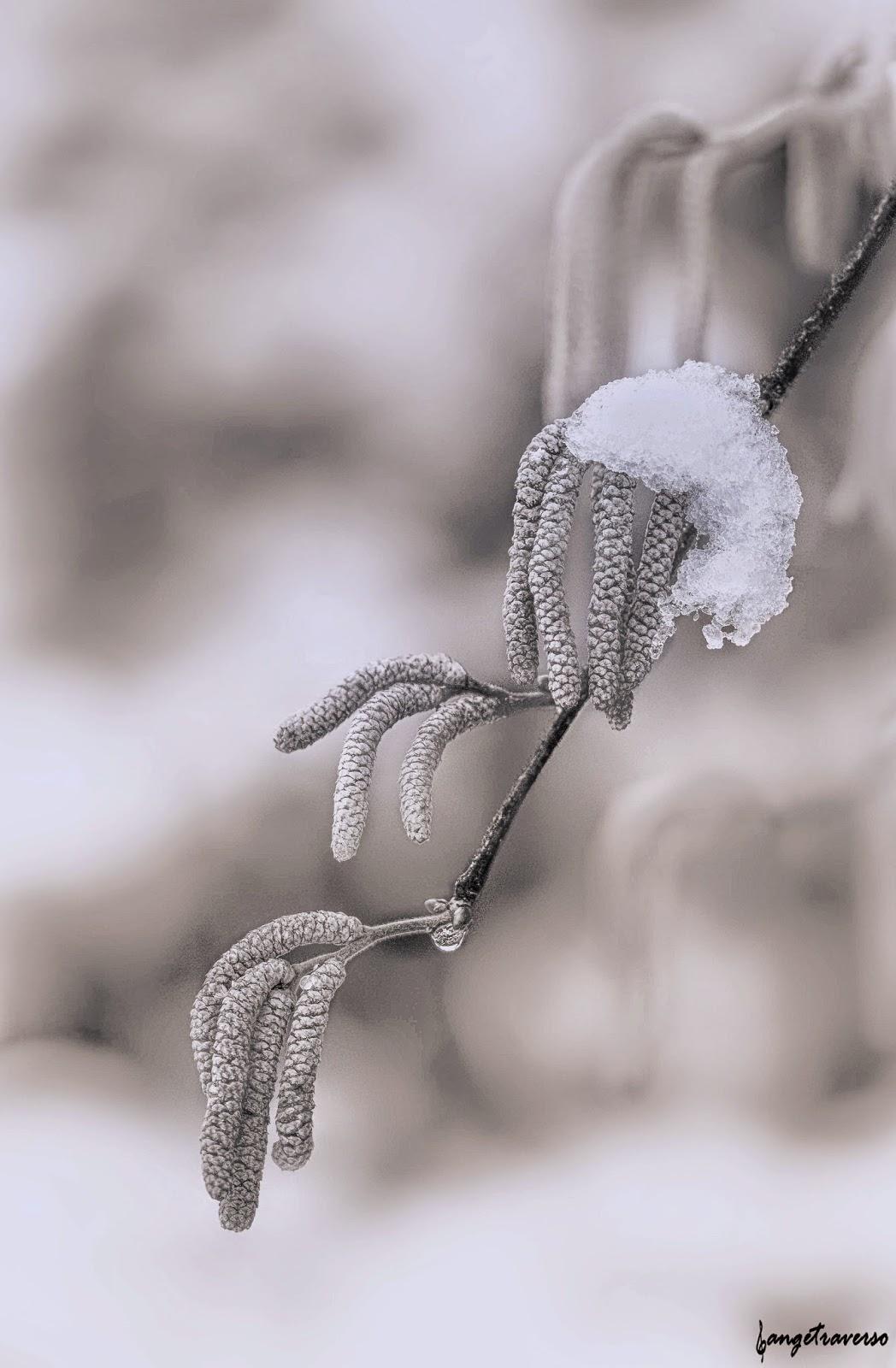 Hiver, froid, neige dans les abres. Haute-Savoie