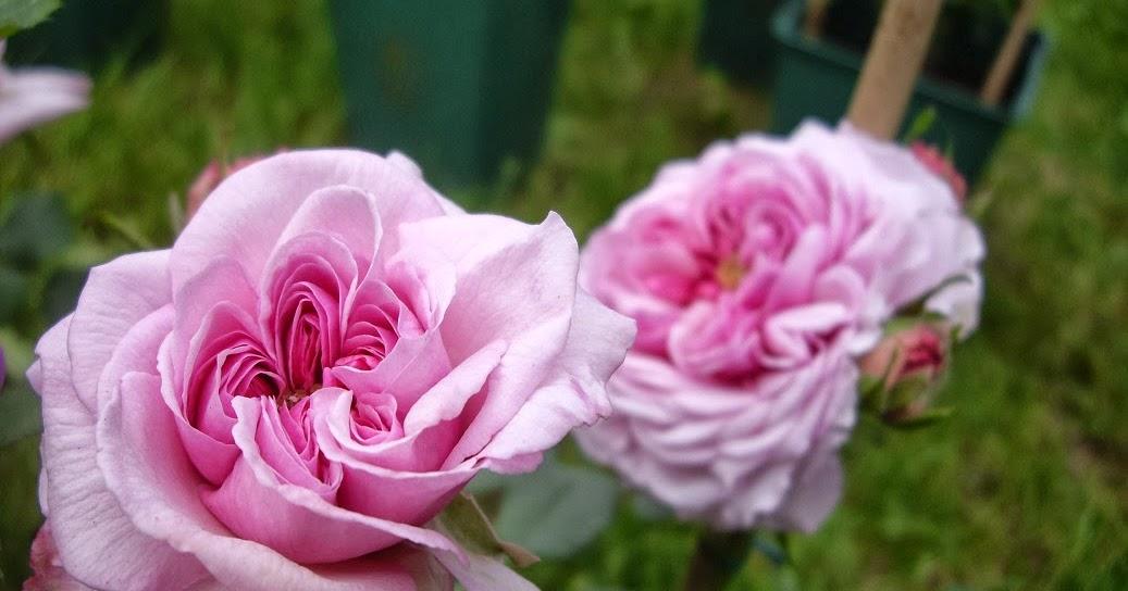 Derri re les murs de mon jardin retour de courson - Derriere les murs de mon jardin ...