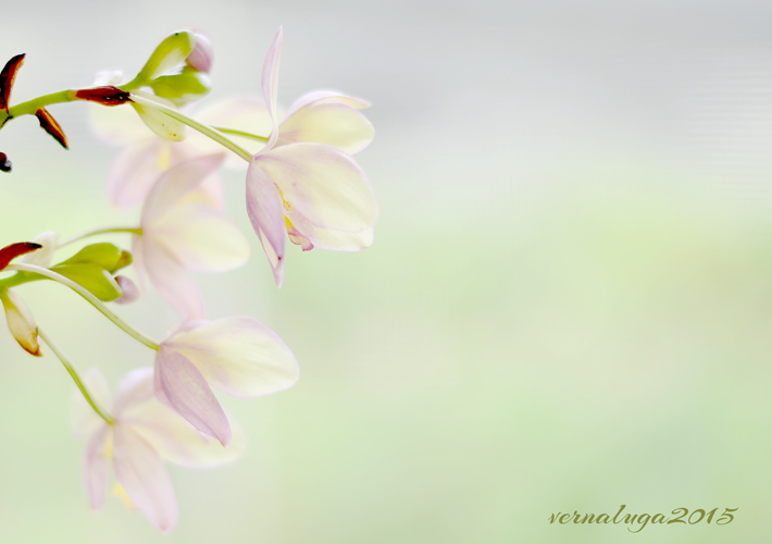 Floral Photography by Verna Luga