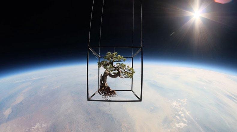 Árbol Bonsai japonés y flores lanzados al espacio realizan un viaje increíble