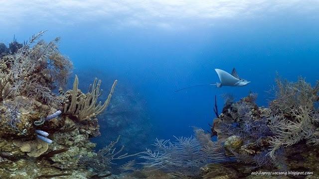 Ảnh đẹp rạn san hô