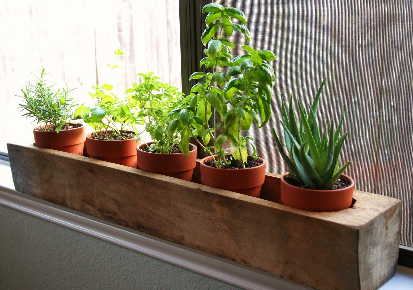 Windowsill Planter Raised Vegetable Garden Layout 4x8 Tag