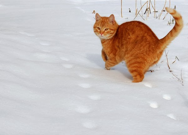 cat loves snow in yetaland