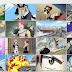 Fairy Tail episode 7 sub indonesia