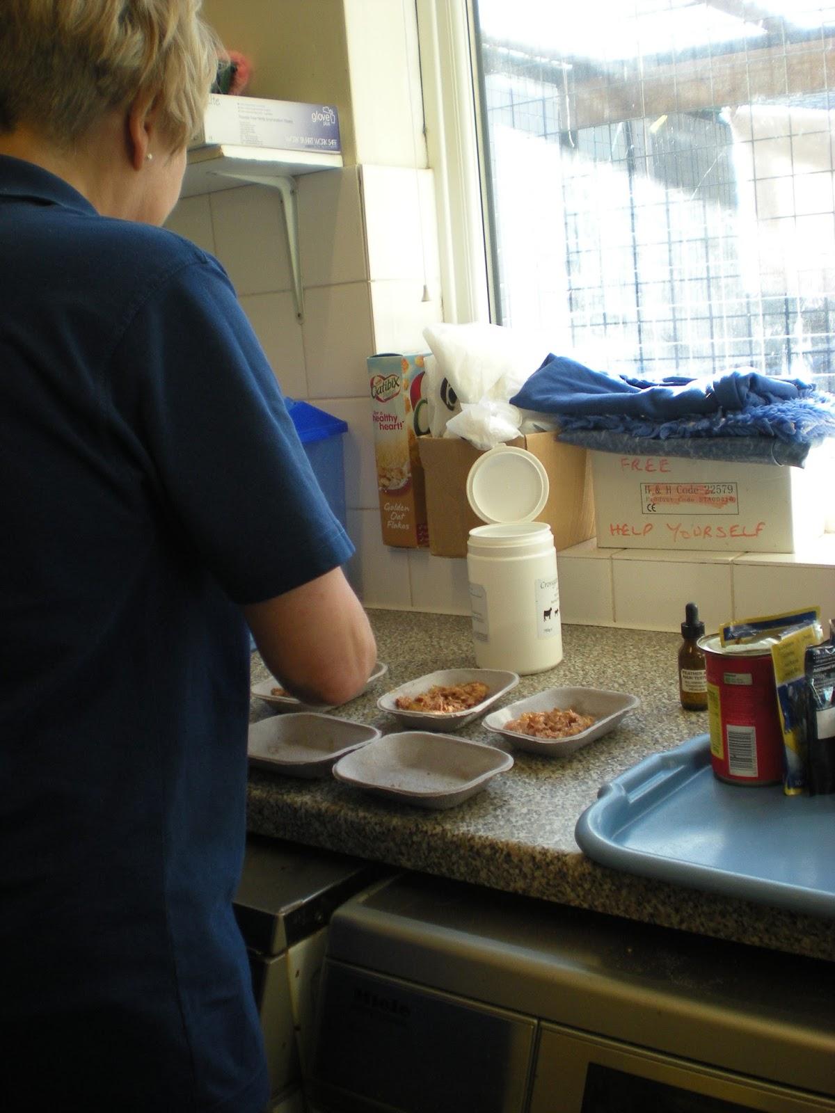 Preparing cat mealsPreparing cat meals