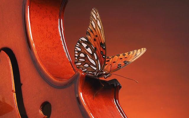 Best Jungle Life violin, animals wallpapers