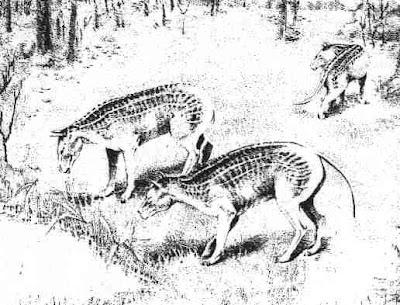 mamiferos del paleoceno Ectoconus