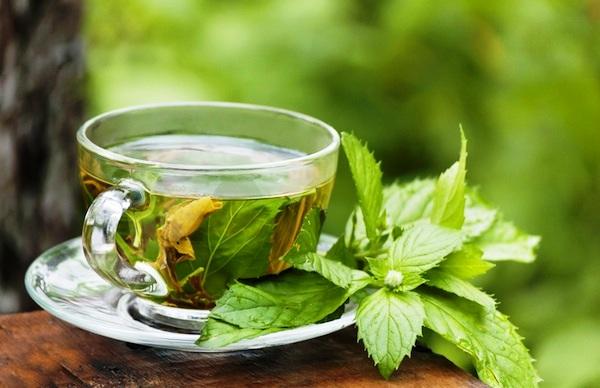 best herbs for pregnancy