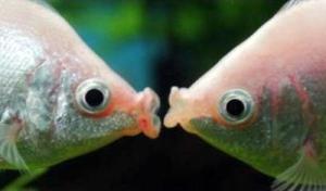 foto peixe