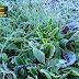 Parlamentarios UDI valoran medida de Gobierno en ayuda de los agricultores afectados por las heladas