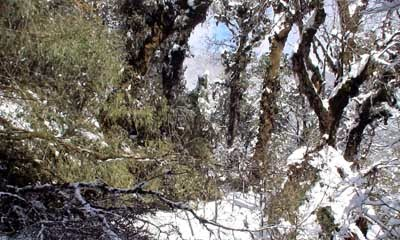 Sandakphu, Phalut Tonglu witnesses season's first snowfall
