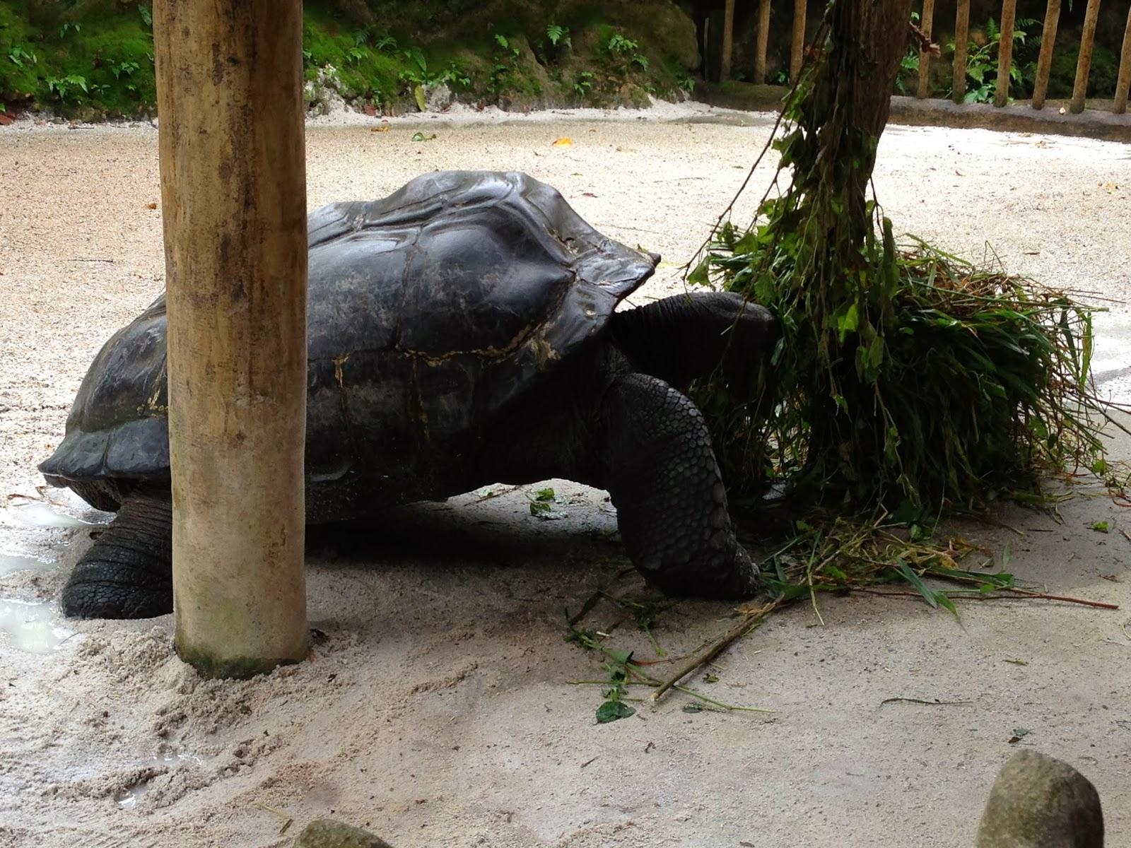 Singapore Zoo ANimals-Singapore Zoo Timings