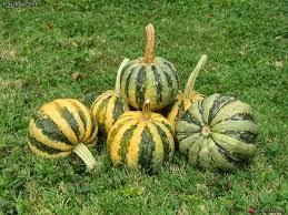 New World Food Mayan Pumpkins