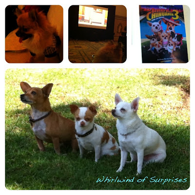 Beverly Hills Chihuahua review
