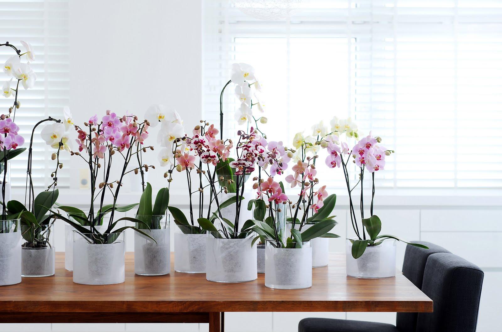 Цветок орхидея своими руками