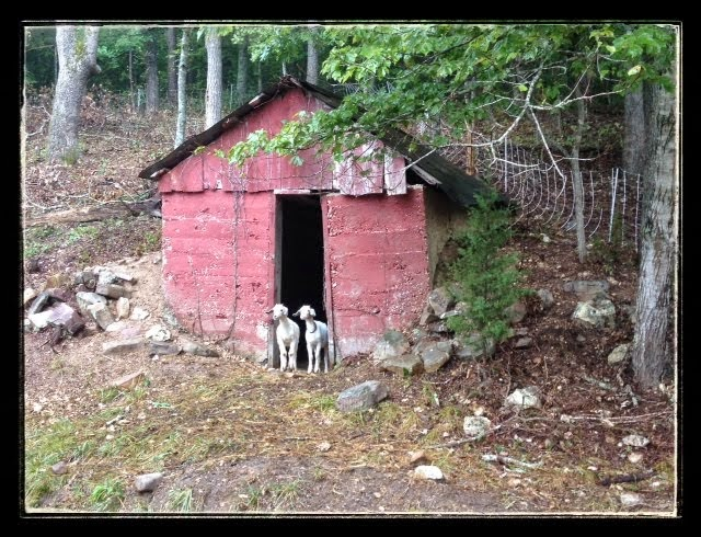 Old Root Cellar Behind the House with Sven and Anna