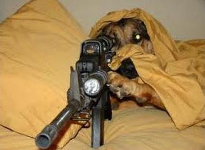 perro dispara nalgas de su amo