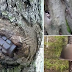 TREES OF WAR: On the site of a great battle sprouted trees with bombs and helmets