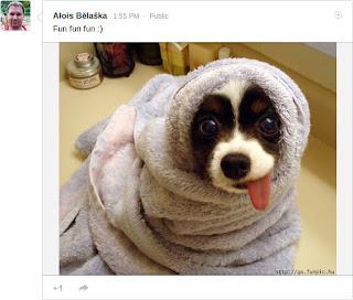 Google+ Photo Activity
