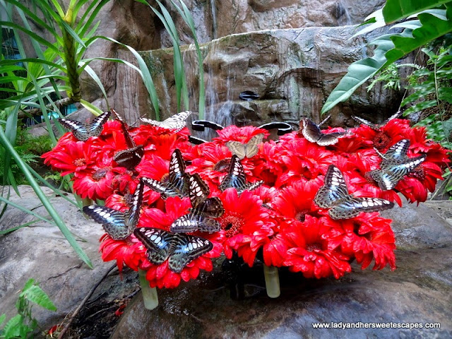 Butterflies inside Changi Airport Singapore
