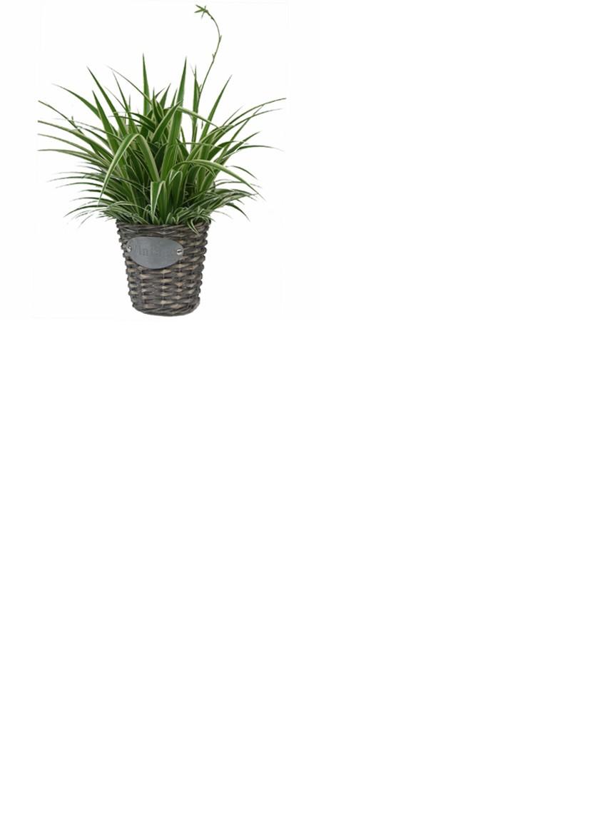vivre feng shui bordeaux contrecarrez les champs lectromagn tiques par les plantes. Black Bedroom Furniture Sets. Home Design Ideas