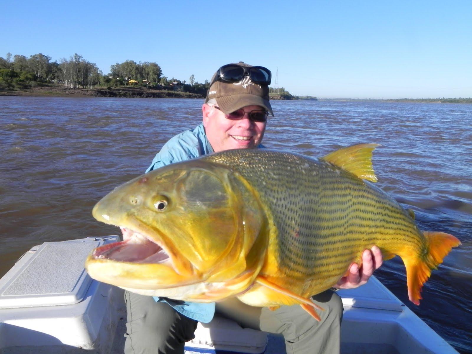 The fishing news uruguay river for monster golden dorado for Golden dorado fish