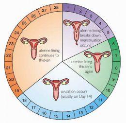 menstruatie na zwangerschap