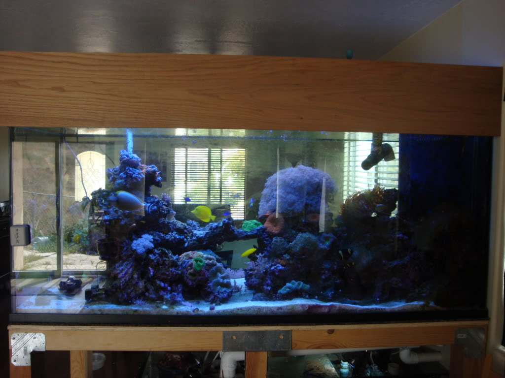 Acrylic fish tanks for sale used fish tanks for for Used fish tanks for sale on craigslist