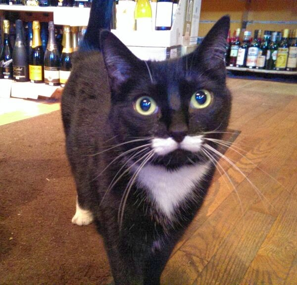 Funny cats - part 96 (40 pics + 10 gifs), cat pictures, cat with mustache