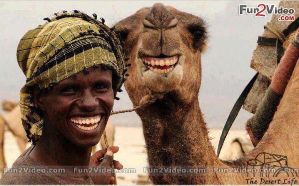طاااااش funny-smiley-face.jpg