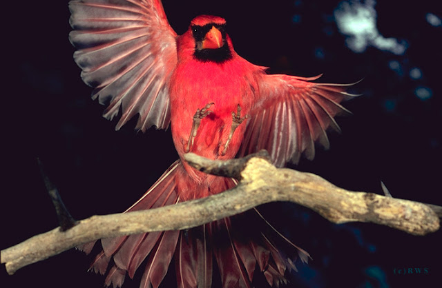 நான் பார்த்து ரசித்த புகைப்படங்கள் சில.... - Page 2 Flying+Birds+%25287%2529
