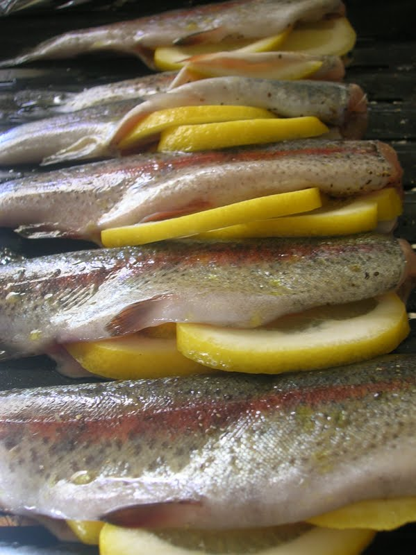 Rindy mae herb garlic grilled trout for Clove oil fish