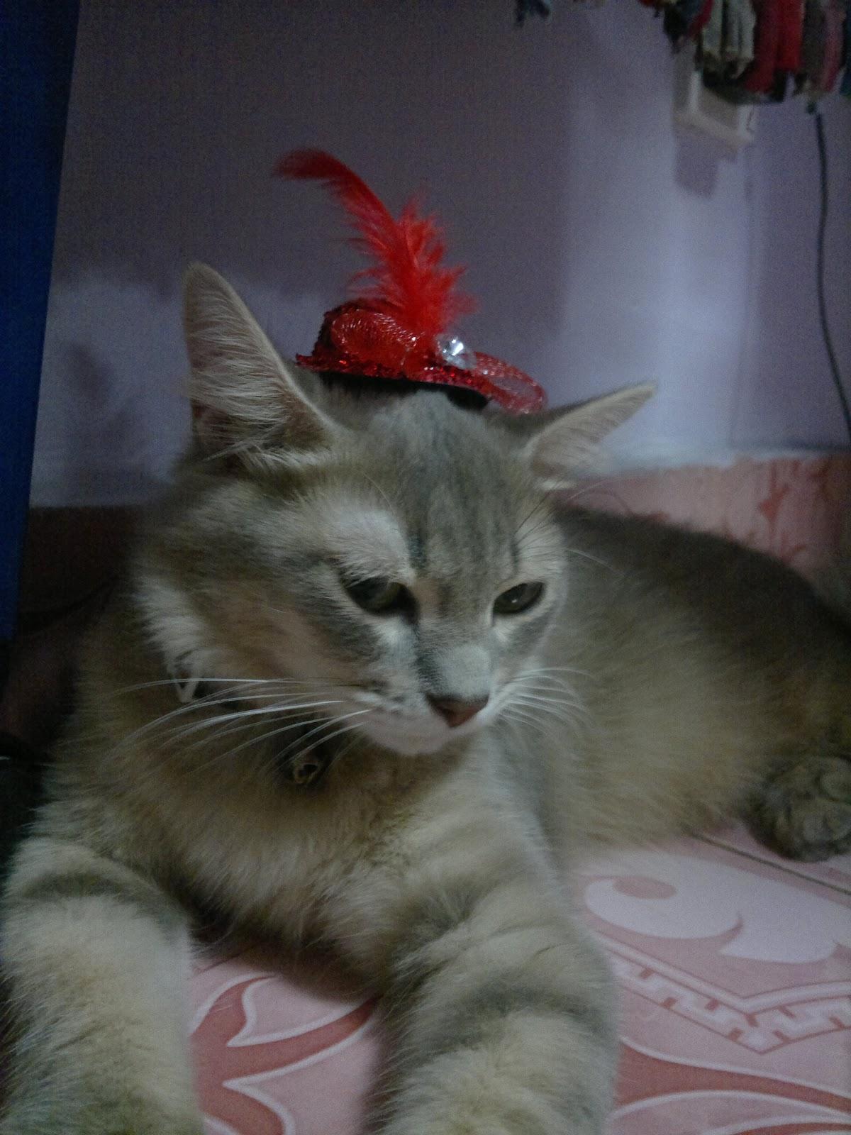 Foto-foto kucing cantik kiriman Lieza Marcella | Kucing gue