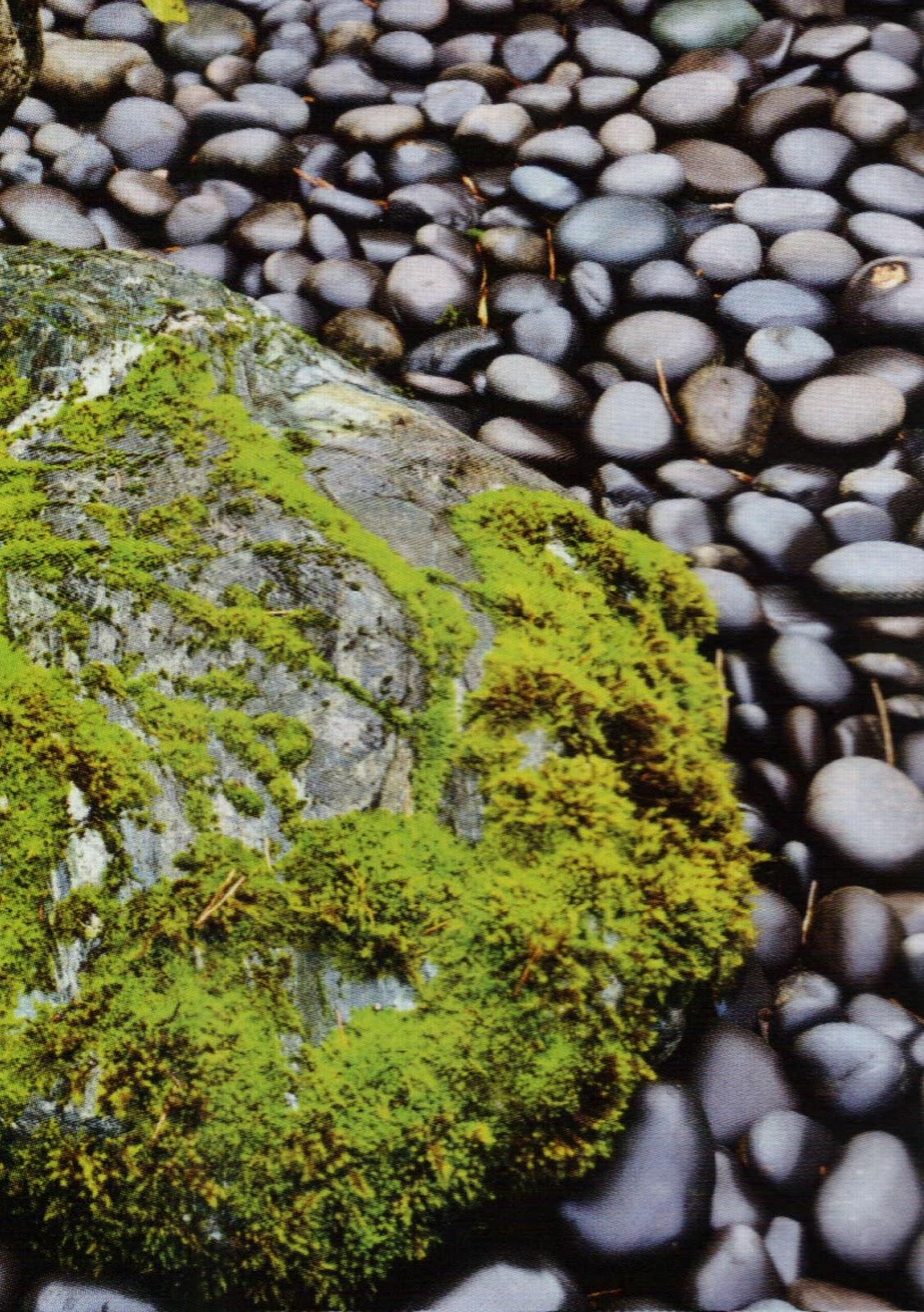 Nature en manche nature et formation for Dessinateur paysagiste