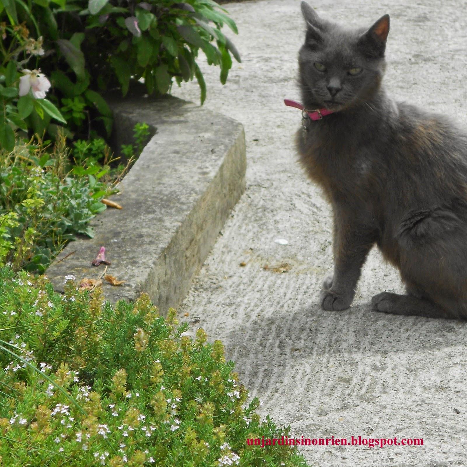 Aphtes du chat et thym du jardin for Aphte traitement maison
