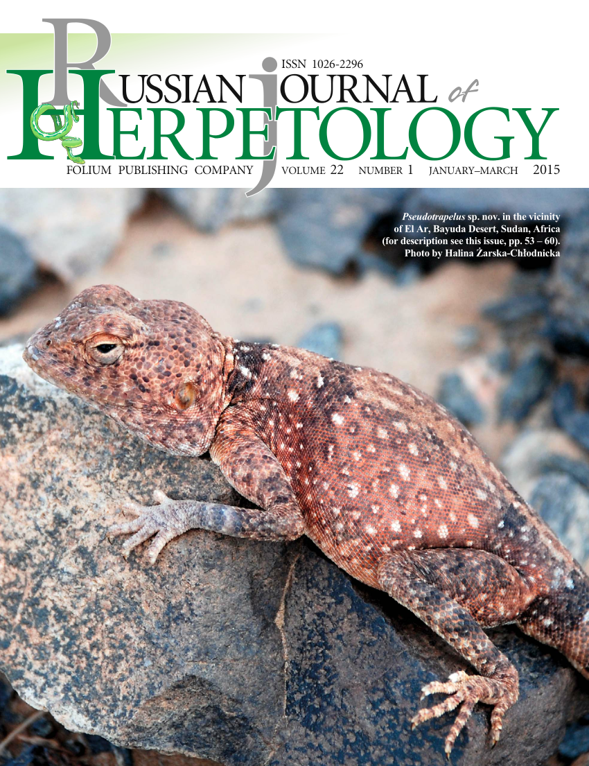 [Herpetology 2015] Pseudotrapelus chlodnickii  Red'n…