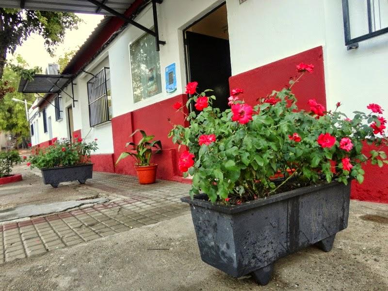 AMPA CerroSjuan