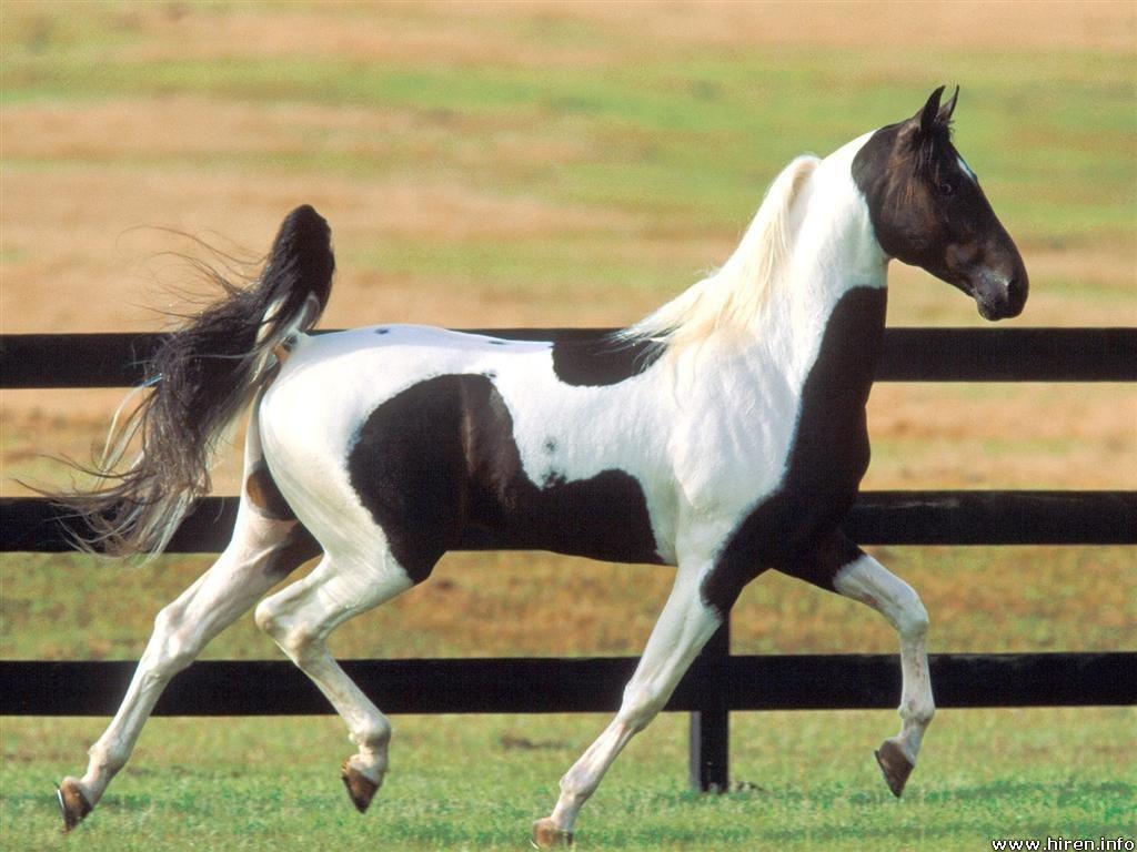 Imagenes de caballos