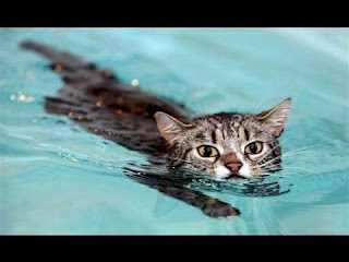 funny cat in water angel