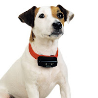 Dog wearing a bark collar